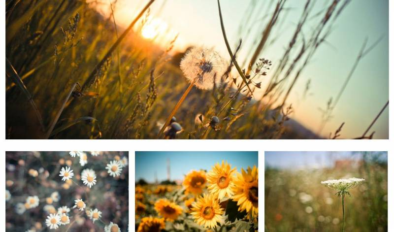 Free WordPress Photography Themes